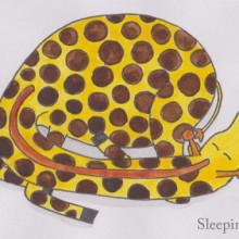 Sleeping Giraffe by Sara